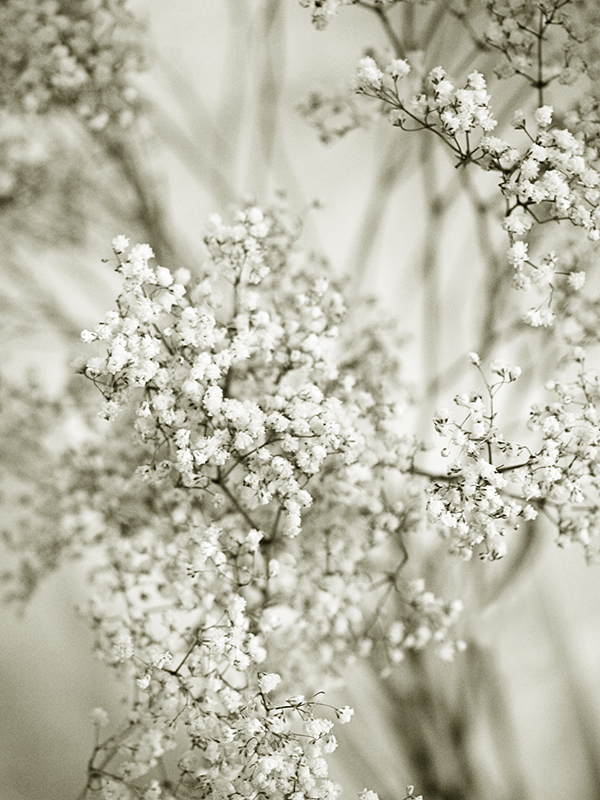 Fleurs florilège